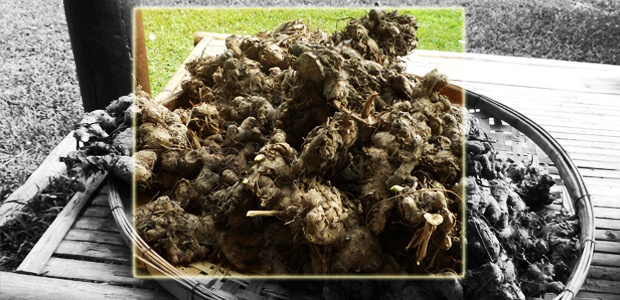 hydrosol, plant materials, materials, Plai, Ginger, Lemongrass, Bamboo
